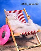 Xavier, ANIMALS, REALISTISCHE TIERE, ANIMALES REALISTICOS, cats, photos+++++,SPCHCATS925,#a#, EVERYDAY