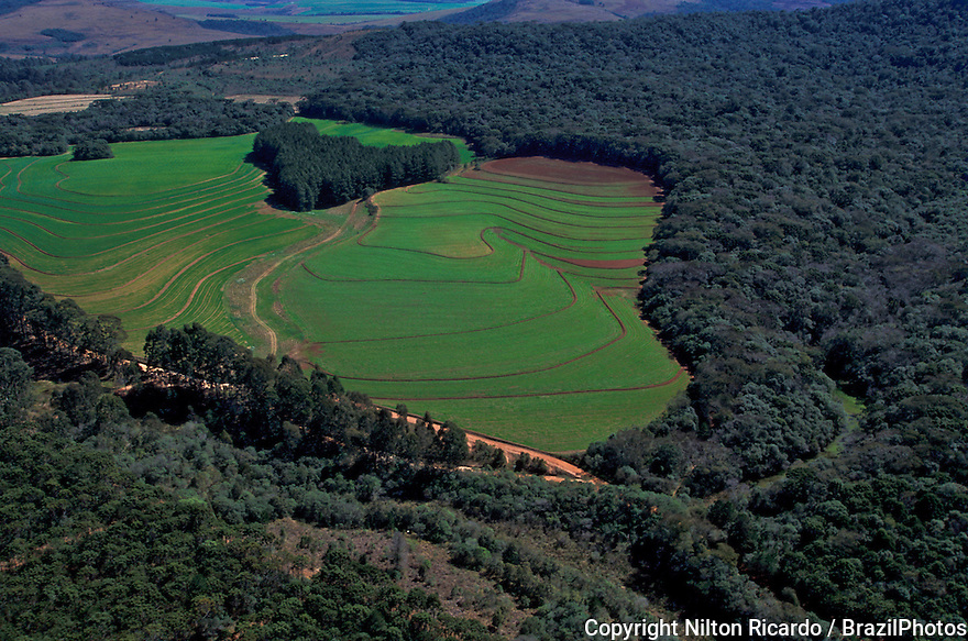 Soy plantation clearing Atlantic rainforest, Parana State, Brazil. Deforestation for the agribusiness. Economic development creating ecological unbalance.
