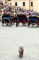Mirto passeggia libero a Piazza di Spagna<br /> Roma 19-09-2014 Un uomo, Stefano passeggia a Piazza di Spagna con un maiale di nome Mirto tenendolo al guinzaglio.<br /> A man, Stefano leading a pig, named Mirto, in Spagna Square, just in front of the Spanish Steps<br /> Photo Samantha Zucchi Insidefoto