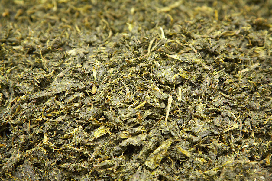 Finished whole leaf green tea exiting a dryer in the town of Chimate in the Yungas region of Bolivia.