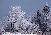 1I01-009a  Ice storm, winter, ice covered trees