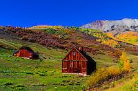 Fall color, near Telluride, Colorado USA.