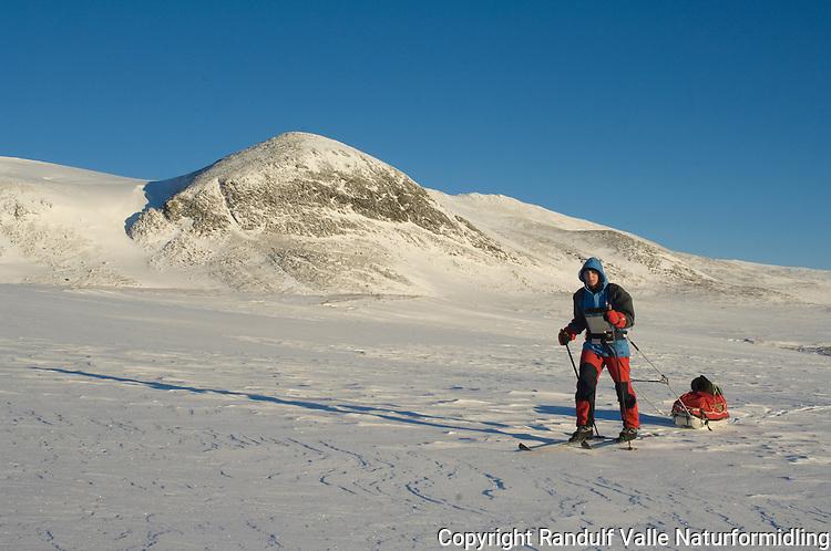 Jente trekker pulk i Dovrefjell en gnistrende vinterdag ---- Girl pulling sled