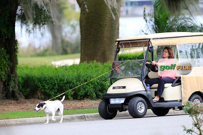 Dog walking American Style during the preview of the Hero World Challenge, Isleworth Golf &amp; Country Club, Windermere, Orlando Florida, USA. 03/12/2014<br /> Picture Fran Caffrey www.golffile.ie