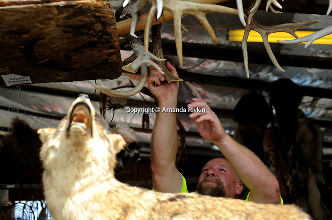 A man reaching for antlers at a booth featuring many different kinds of taxidermy at the Wisconsin State Fair in West Allis, Wisconsin on August 3, 2008.