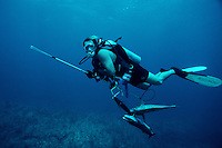 Spearfishing is a popular sport. Scuba divers take only the fish they need. It has been the cause of many shark attacks, Bahamas Islands