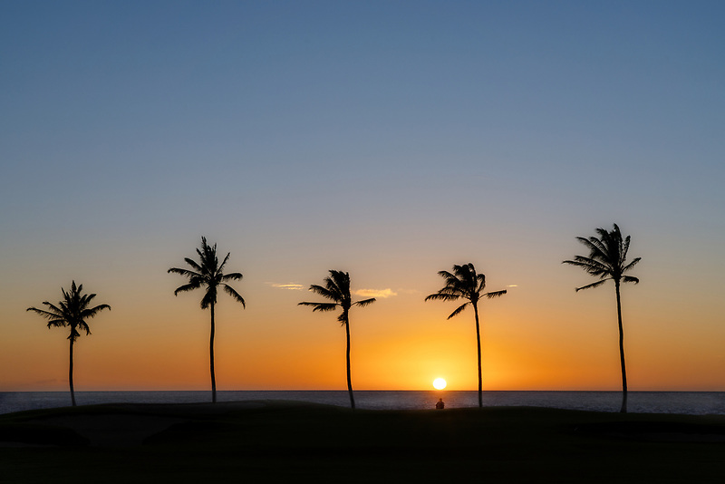 Sunset and palm trees on with person viewing. Hawaii, The Big Island