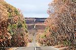 Ile Kangourou au sud d'Adelaide.30 % de la superficie de l'ile a brule pendant l'automne 2007.