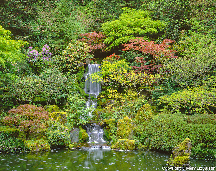 Portland, OR<br /> Japanese maples and ornamental shrubs with spring foliage surround Heavenly Falls flowing into Lower Pond in the Portland Japanese Garden