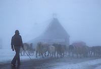 Europe/France/Auverne/63/Puy-de-Dôme: Le col de la Croix Morand en hiver