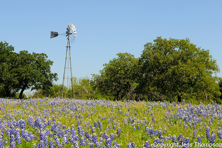 Bluebonnets and Windmill, Kingsland, Texas