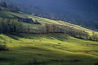 Europe/France/Auvergne/15/Cantal/Parc Régional des Volcans/Massif du Puy Mary (1787 mètres): La vallée de Dienne et le Puy Mary