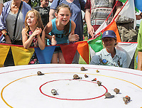 2014 World Championship Snail Racing in Congham (Norfolk)<br /> Picture description:<br /> Everyone has got a favourite to spur on....<br /> General infos:For more than 25 years the World Snail Racing Championships have been held at Congham, near King's Lynn, in Norfolk.Before snails can enter a race a sticker with a number must be put on so they can be identified. The snails race from the centre of a circle to the outside. The circle has a radius of 13 inches. The snails are put in the middle and pointed in the right direction.The  Snail Master Neil starts the races. He shouts: &quot;Ready, steady, SLOW!&quot; And off dash the snails! The Snail Master keeps the course well-watered as snails like damp conditions.Races are held on a table covered with a white cloth. Machine a circle, with braid in the middle, and then machine a similar circle 13 inches away.Owners do dress up. The World record stands at 2 minutes over the 13 inches. It was set up in 1995 by a snail called Archie. The record can only be challenged at the World Championships at Congham.Giant foreign snails are not allowedOften owners like to give their snails names like Speedy or Schumacher!<br /> Picture by Marcello Pozzetti &copy; IPS PHOTO AGENCY<br /> Cavell Barn<br /> The Common<br /> Swardeston<br /> Norwich<br /> Norfolk<br /> NR14 8DZ<br /> T 01508 571 480<br /> M 07973308835