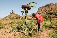 Pitaya and ananas production