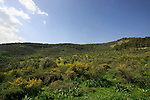 Isarael, Upper Galilee, scenery by Biria forest Scenic Route