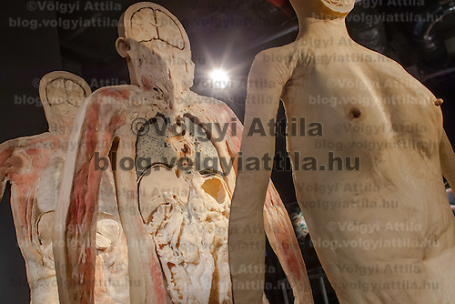 Slices of a siliconized human body are seen on display on the Human Body exhibition in Budapest, Hungary on March 26, 2012. ATTILA VOLGYI