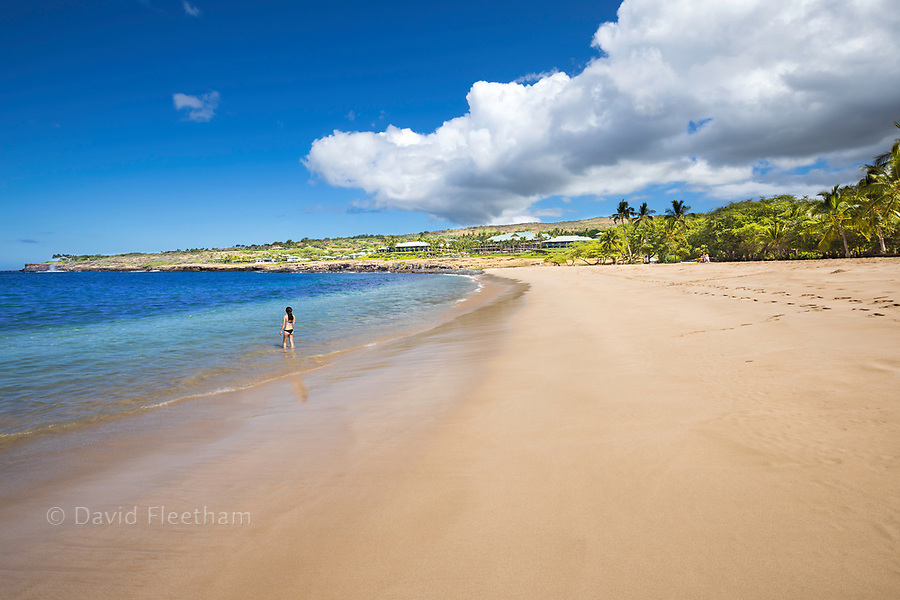 One woman enters the water off Hulopo'e Beach Park, with the Four Seasons Resort over looking the golden beach and palm tree's, Lanai Island, Hawaii, USA.