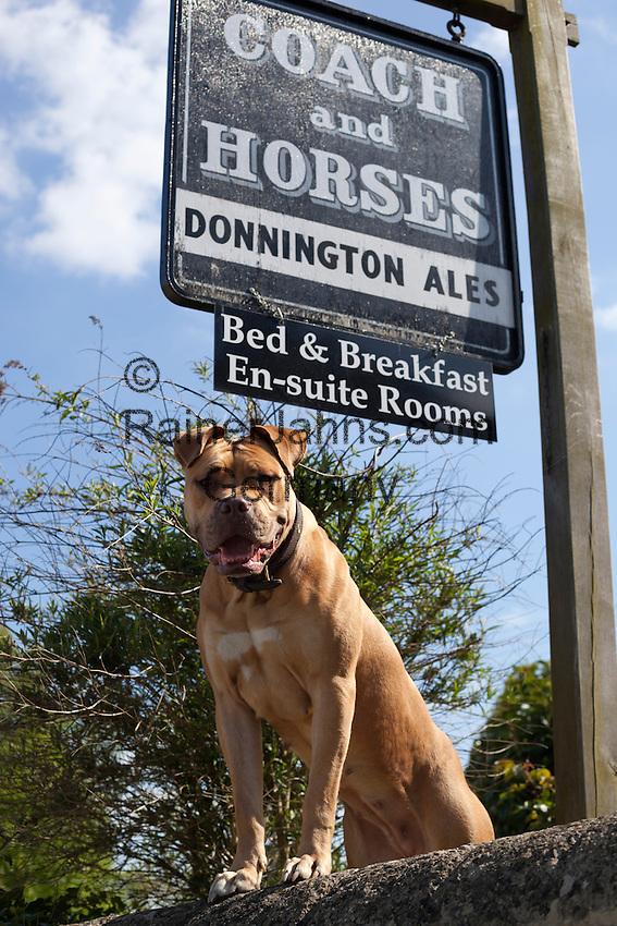 Grossbritannien, England, Gloucestershire, Longborough: Bed & Breakfast fuer Hundeliebhaber | United Kingdom, England, Gloucestershire, Longborough: particularly inviting dog below pub sign