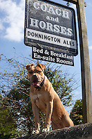 Grossbritannien, England, Gloucestershire, Longborough: Bed & Breakfast fuer Hundeliebhaber | United Kingdom, England, Gloucestershire, Longborough: particularly inviting dog below pub sign