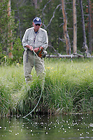 Fishing the Gibbon River for Brook and Brown Trout, Yellowstone National Park