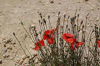 Campo di grano. Field of grain....