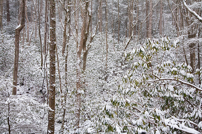 Snow blankets the forest along Rock Fork Creek, Unicoi County