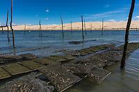 France, Gironde (33), bassin d'Arcachon, réserve naturelle du Banc d'Arguin, Sur les parcs à Huitres  , en fond la Dune du Pyla// France, Gironde, Bassin d'Arcachon, Banc d'Arguin Natural Reserve, Dune du Pyla in background