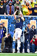 Morgantown, WV - NOV 18, 2017: West Virginia Mountaineers wide receiver David Sills V (13) catches a big third down pass during game between West Virginia and Texas at Mountaineer Field at Milan Puskar Stadium Morgantown, West Virginia. (Photo by Phil Peters/Media Images International)