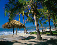Nayarit, Mexico<br /> Coconut Palms (Cocos nucifera) shade a hammock on the beach of Bahia de Banderas (Banderas Bay) near the village of Bucerias