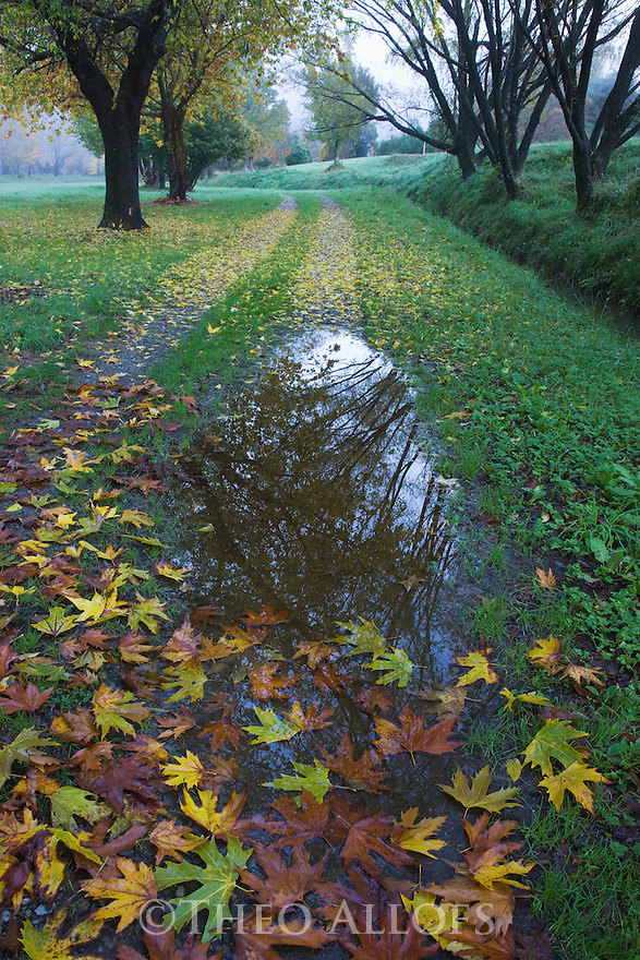 Dirt road after rain, covered in colorful fall leaves, south of Motueka, South Island, New Zealand
