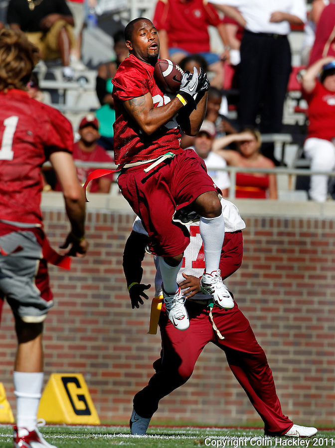TALLAHASSEE, FLA. 4/16/11-FSUG&G041611 CH-Former Florida State running back Nick Maddox intercepts a Brad Johnson pass during the flag football game during half time of the Garnet and Gold game Saturday in Tallahassee..COLIN HACKLEY PHOTO