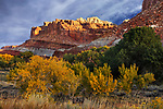 Autumn Colors at Capitol Reef National Park, Utah, USA