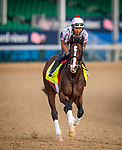 LOUISVILLE, KENTUCKY - MAY 02: War of Will prepares for the Kentucky Derby at Churchill Downs in Louisville, Kentucky on May 01, 2019. Evers/Eclipse Sportswire/CSM
