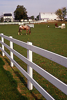 AJ3226, amish, farm, Amish Country, Lancaster County, Pennsylvania, Horses grazing in a fenced in pasture on an Amish farm in picturesque Pennsylvania Dutch Country in the state of Pennsylvania.