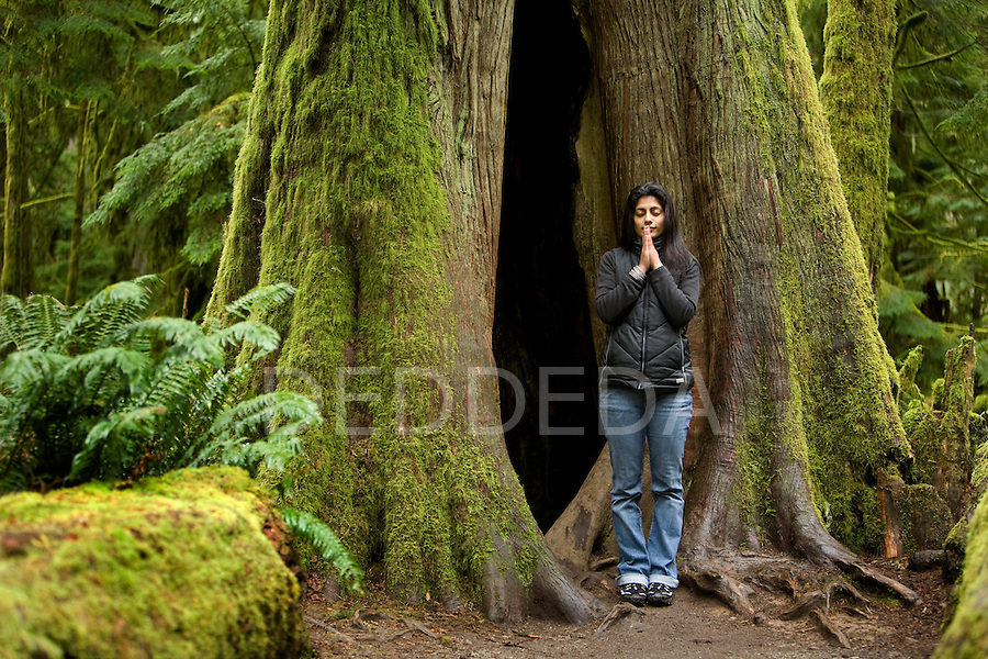 A young woman meditates next to a massive moss-covered oldgrowth Douglas fir tree in Cathedral Grove, in MacMillan Provincial Park on Vancouver Island, British Columbia, Canada.