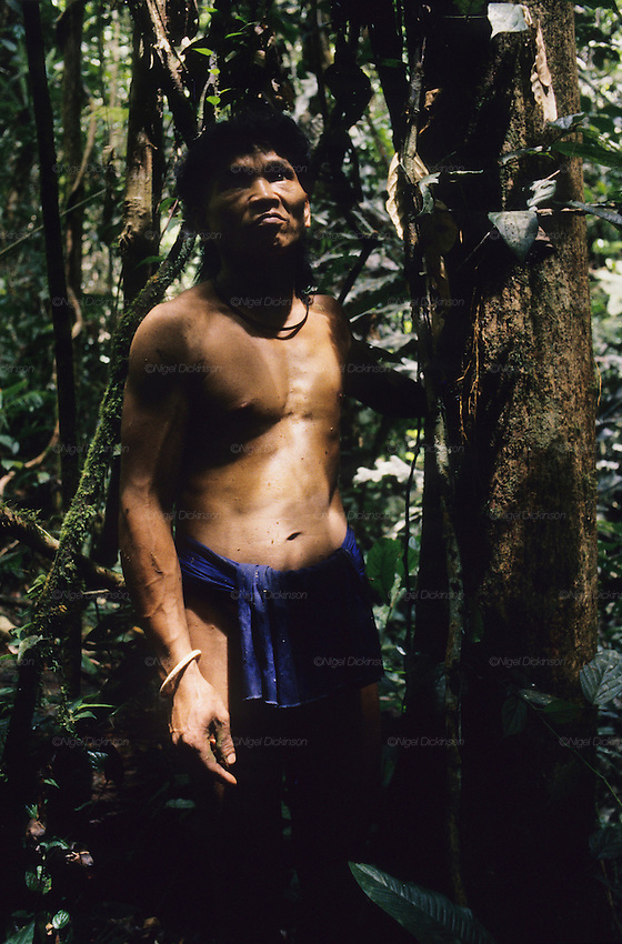 Baru, a semi-nomadic Penan, indigenous hunter-gatherer, searching for sago and wild boar. Dressed in traditional 'chawats' loincloth, searching for sago from the forest. In the rainforest near Long Tegang, Limbang district, Sarawak, Borneo 1989<br />
