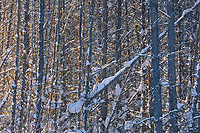 SNow on trees<br />
