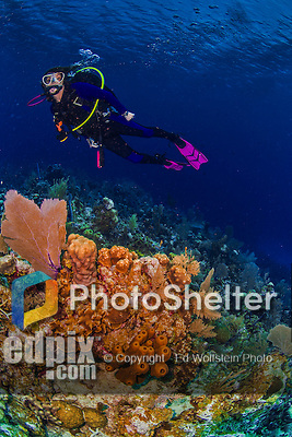 8 June 2015: SCUBA diver Sally Herschorn explores the scenery at Ocean Point Reef, on the North Shore of Grand Cayman Island. Located in the British West Indies in the Caribbean, the Cayman Islands are renowned for excellent scuba diving, snorkeling, beaches and banking.  Mandatory Credit: Ed Wolfstein Photo *** RAW (NEF) Image File Available ***
