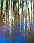 Aspen reflection,Grand Mesa,Colorado