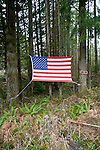 Road Trip, US 2, March, 2013, American flag tied to trees, Skykomish, Washington State,