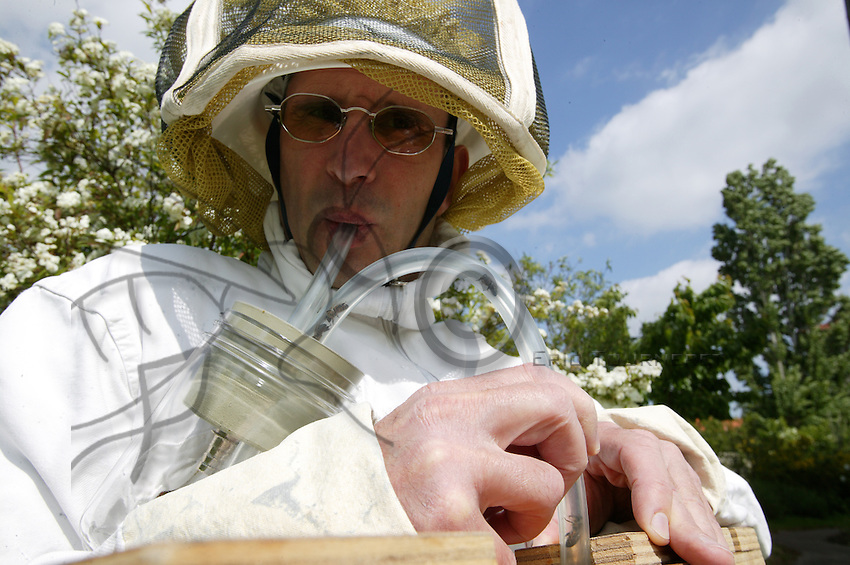 A beekeeper and beehive for apipuncture treatments using bee venom. He extracts a bee using a tube, and then specific points on the body are stung with the bee's stinger.
