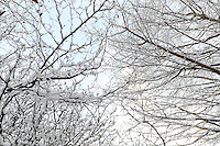 Snow on branches