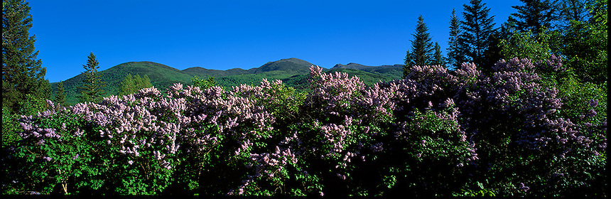 Summer lilacs frame New Hampshire's Presidential Range in the White Mountain town of Randolph. Photograph by Peter E, Randall