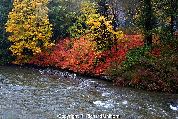 Fall color brightens the shoreline along the Stehekin River at Harlequin Bridge over the Stehekin River in the Lake Chelan National Recreation Area of the North Cascades National Park.