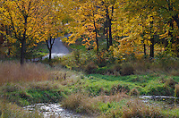 Wiiloway Brook meanders thrpugh a wetland in the autumn at the Morton Arboretum, DuPage County, Illinois