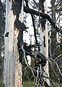 Fire damaged tree close up at Blewett Pass, in the Wenatchee Mountains. Stock landscape photography by Olympic Photo Group