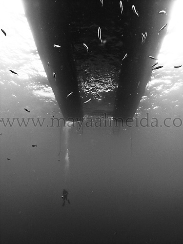 Shots_of_underwater_divers_taken_around_the_world