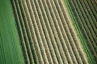 Europe/France/Pays de la Loire/49/Maine-et-Loire/Env de Saumur: Arboriculture -  vue aérienne