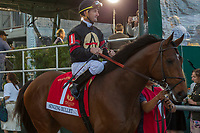 HALLANDALE BEACH, FL  JANUARY 27: #1 Singing Bullet, ridden by Robby Albarado in the post parade of the Pegasus World Cup Invitational, at Gulfstream Park Race Track on January 27, 2018,  in Hallandale Beach, Florida. (Photo by Casey Phillips/ Eclipse Sportswire/ Getty Images)