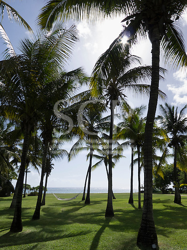 Flic en Flac, Mauritius. La Pirogue tourist resort. Hammock between palm trees by sea.